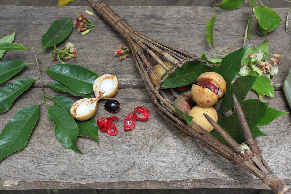 Nutmeg and Clove from the Spice Islands